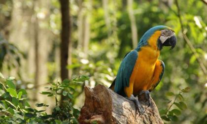 En Córdoba hay 560 especies para el avistamiento