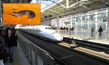 Babosa genera caos en ferroviario de Japón: 26 trenes suspendidos