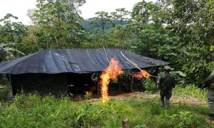 Momentos en que las fuerzas armadas destruyen el laboratorio de coca en el sur de Córdoba.