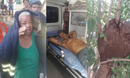 Dos adultos mayores y un perro fueron atacados por abejas africanizadas en Me Quejo
