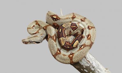 Las serpientes y su rol en el ecosistema