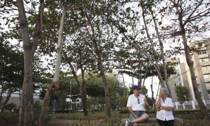 Barranquilla, entre las más arboladas del mundo
