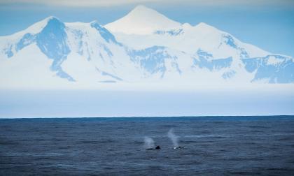 Alarmante multiplicación de récords de calor en la Antártida