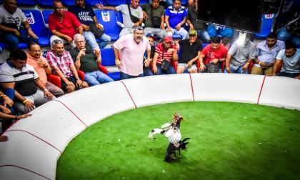 Vista de una pelea de gallos en Juan Mina, Atlántico.