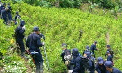 Defensoría alerta por protestas en medio de erradicación de cultivos