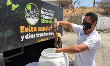 En Santa Marta 100 animales silvestres han sido rescatados en la cuarentena