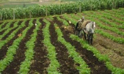 En 27 departamentos del país investigan comercializadores de agroquímicos
