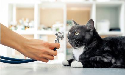 Lo que indica la tos en nuestras mascotas