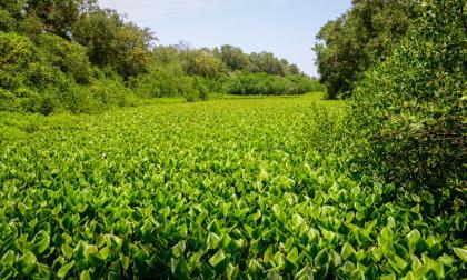 Ecosistemas de la Región Caribe presentan un 88% de deterioro: Sirap