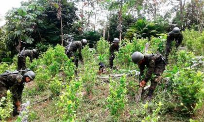 El impacto de la pandemia en la producción de cocaína en Colombia