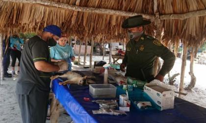Personal de la fundación Isla Animal y uniformados de Patrulla Veterinaria Móvil participaron en la jornada.