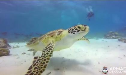 Armada logra proteger 62 nidos de tortugas marinas en San Andrés