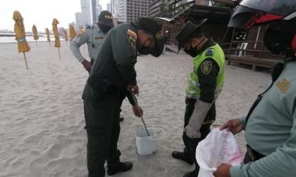 Varios uniformados rescatan a la mapaná hallada en Bocagrande y que fue entregada a Cardique. En la zona varias personas trotaban.