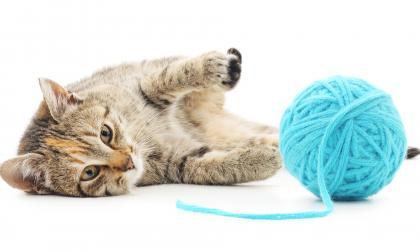 Mascotas   Los gatos y sus manías