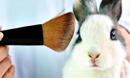 Así está Colombia frente al mundo en pruebas cosméticas con animales