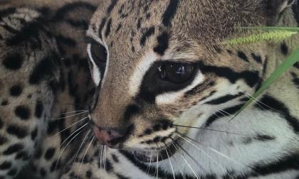 En Córdoba liberan especies tras ser rescatadas del tráfico ilegal de fauna