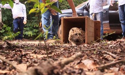 En Día de la Biodiversidad en Colombia, autoridades liberan 2.473 animales