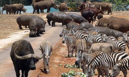 ONU advierte que quedan pocos años para evitar sexta extinción masiva