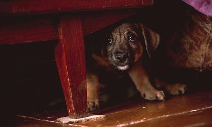 Cómo ayudar a su perro a no temer a las tempestades