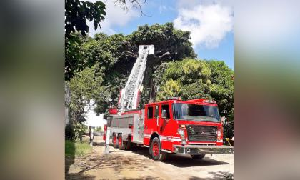 Máquina del Cuerpo de Bomberos durante la tala del árbol de caucho cartagenero en Los Trupillos.