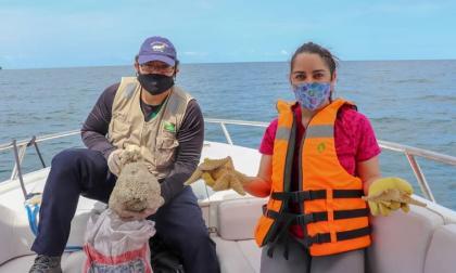 Devuelven al mar 198 moluscos procedentes de Bogotá