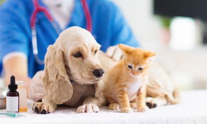 Tanto perros como gatos deben seguir rigurosamente el calendario de vacunación para proteger sus vidas.