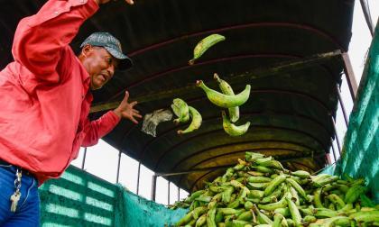 El día en que llovieron plátanos