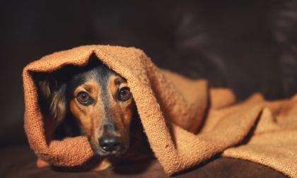 Pirotecnia, una amenaza mortal para las mascotas