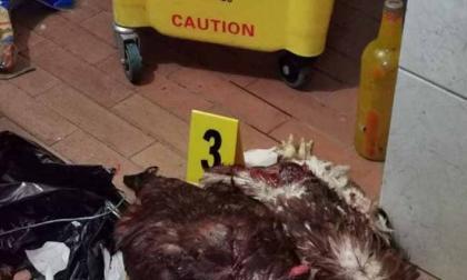 ¿Satanismo, brujería? Una treintena de animales decapitados en Bogotá