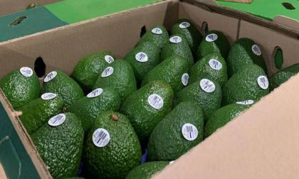 Colombia crea organismo para promocionar el aguacate hass en EE.UU.