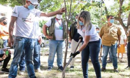 En Santa Marta sembraron 10  mil árboles nativos en 2 meses