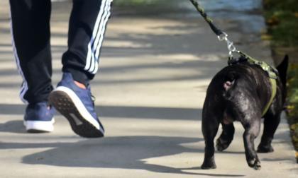 Excremento de mascotas, un conflicto común en las calles de Barranquilla