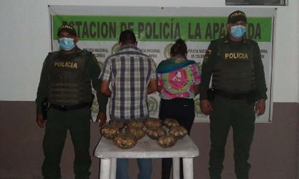 En Córdoba reportan capturas por tráfico de hicoteas