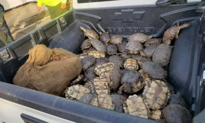 Policía desarticula centro de acopio de hicoteas en Montería