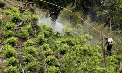 Académicos colombianos piden a Biden abandonar respaldo a fumigación aérea