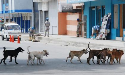 ¿Qué sanción enfrentaría el chofer que arrastró a un perro atado a un carro?