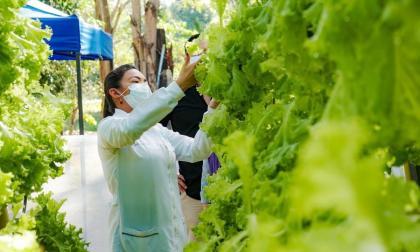 Chinulito, víctima del conflicto, ahora produce lechuga crespa