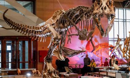 Más de 2.500 millones de Tiranosaurios rondaron la Tierra