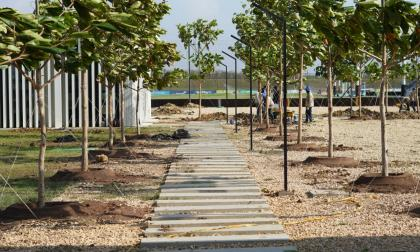 501 árboles serán plantados en la sede de la Federación Colombiana de Fútbol
