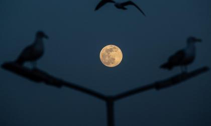 Superluna 'rosa' de abril, ¿Cuándo verla?