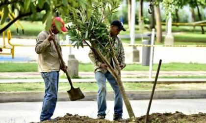 Sector cafetero colombiano aportará un millón de árboles para reforestación