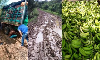 Cosechas a punto de perderse por el mal estado de las vías en Moñitos