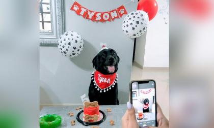 Cumpleaños de las mascotas: un festejo que genera ingresos