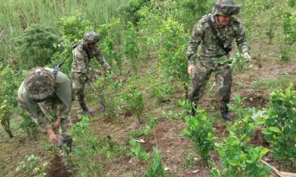 Tribunal suspende erradicación forzada en territorios ancestrales