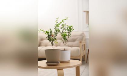 Macetas, un objeto decorativo que lleva la naturaleza al hogar