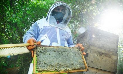 Apicultores piden proteger abejas para el bienestar alimentario del Magdalena