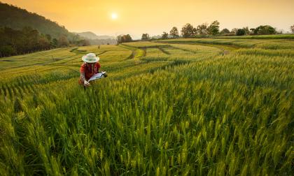La importancia de la seguridad alimentaria