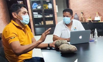 El ñame de Colosó, Sucre, llegará a Estados Unidos y Centroamérica