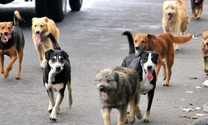 Santa Marta anuncia creación de una Junta Defensora de Animales