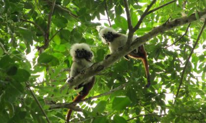 Atlántico recibe 62 hectáreas de bosque seco tropical